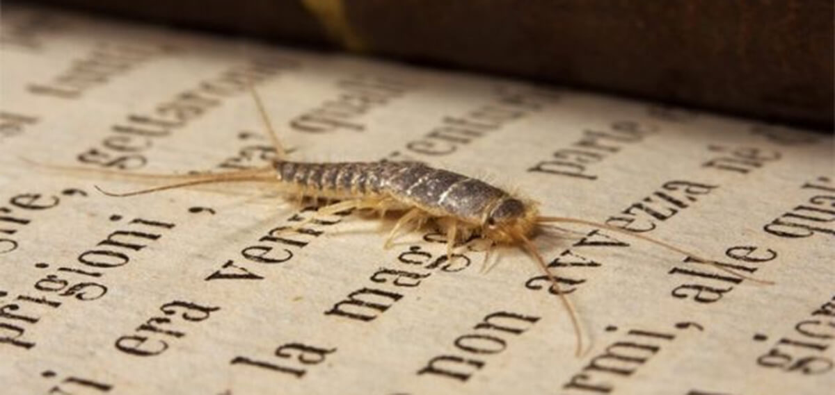 """Conferenza """"Agli insetti piacciono i libri e le opere d'arte"""""""