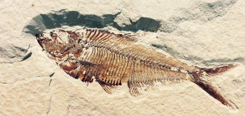 Nesiotikà: seminari di Archeozoologia e Paleontologia a cura della Prof.ssa Maria Rita Palombo