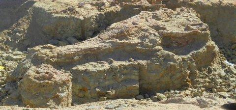 Nesiotikà: seminari di Paleontologia e paoleocologia e di Antropologia, Proff. Zedda e Piga